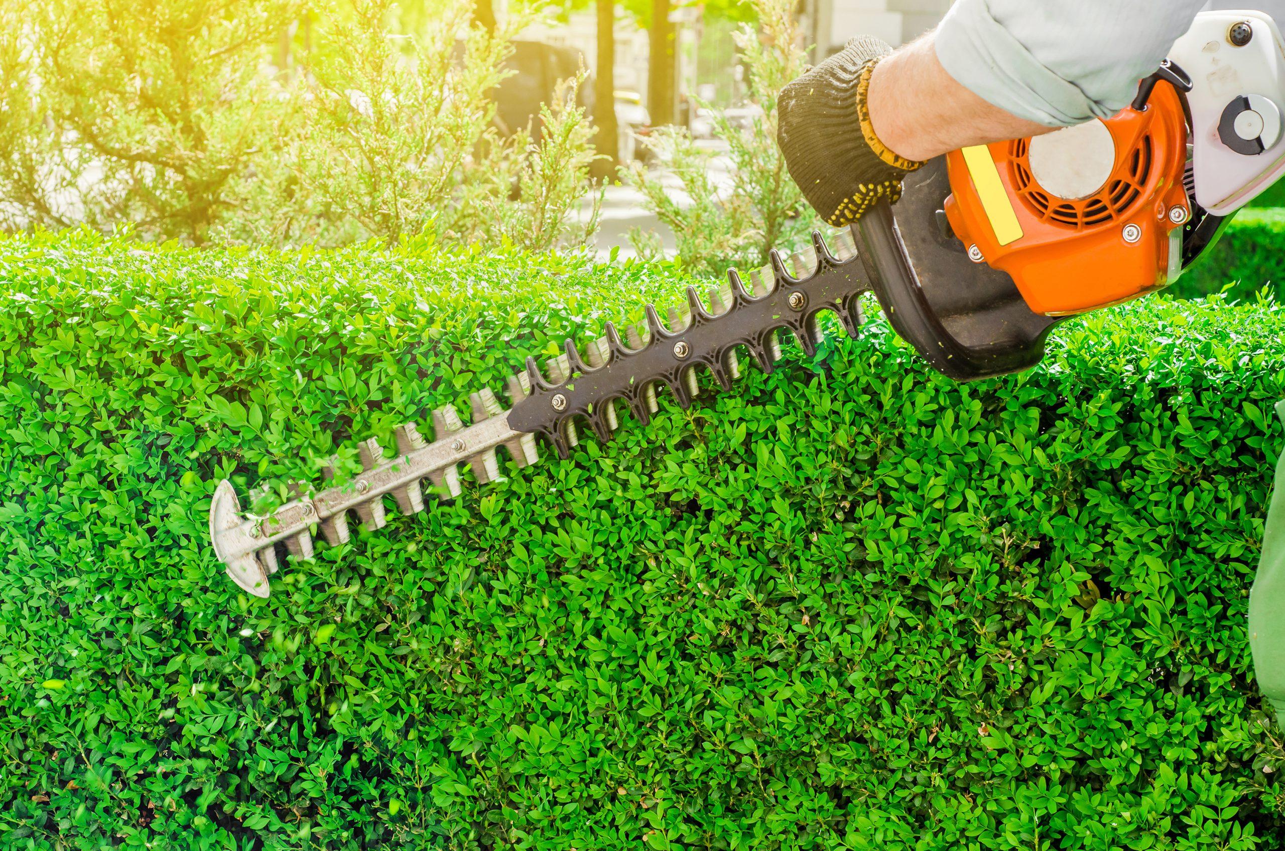 Leistungen - Grünanlagenpflege - März Gebäudemanagement